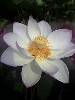 20070731