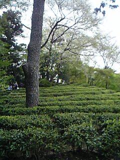 20080526